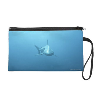 Front view of a Tiger Shark Wristlet Purse