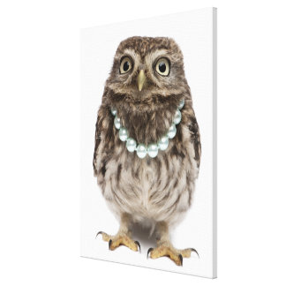 Front view of a Young Little Owl Canvas Print