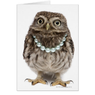 Front view of a Young Little Owl Card