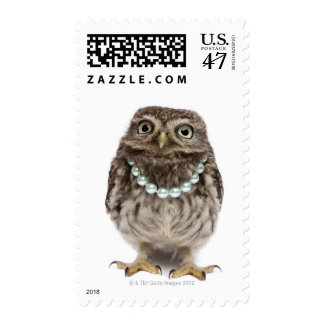 Front view of a Young Little Owl Postage