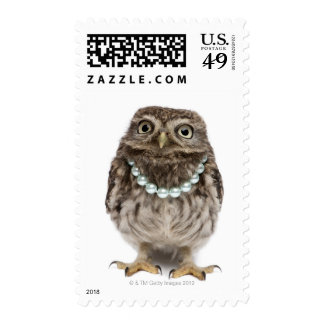 Front view of a Young Little Owl Postage Stamps