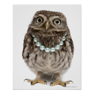 Front view of a Young Little Owl Poster