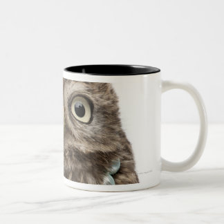 Front view of a Young Little Owl wearing a Two-Tone Coffee Mug