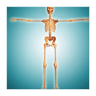 Front View Of Human Skeletal System Canvas Print