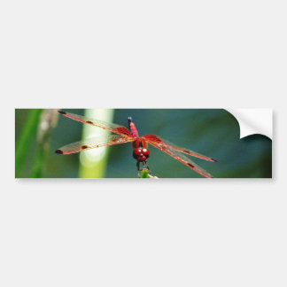 Frontal Red and Black Dragonfly Bumper Sticker