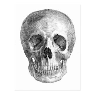 Frontal view drawing of a human skull post card