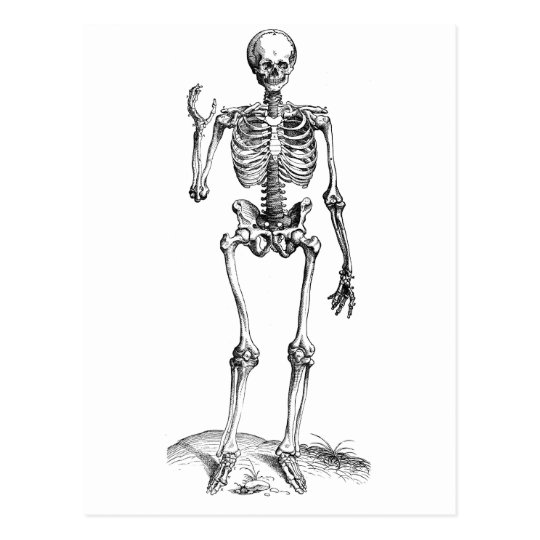 Frontal vintage drawing of a waving skeleton postcard
