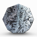 Frost 1 award