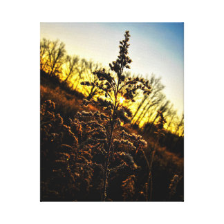 Frost Covered Canvas Print