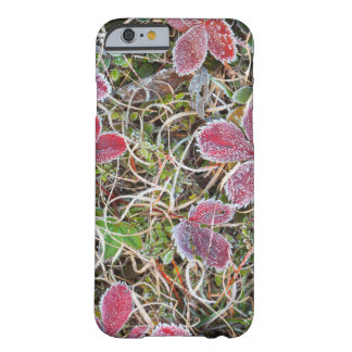Frost covered leaves, Canada Barely There iPhone 6 Case