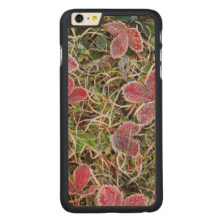 Frost covered leaves, Canada Carved Maple iPhone 6 Plus Case
