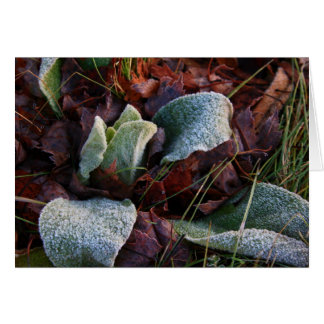 Frost Covered Leaves Card
