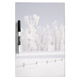 Frost cubrió los árboles y la cerca, Colorado Tableros Blancos