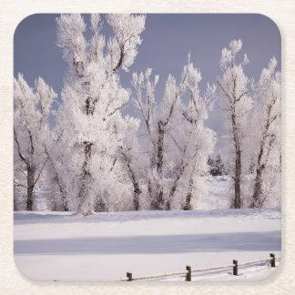 Frost cubrió los árboles y la cerca, Colorado Posavasos Personalizable Cuadrado