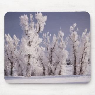 Frost cubrió los árboles y la cerca, Colorado Alfombrillas De Ratones