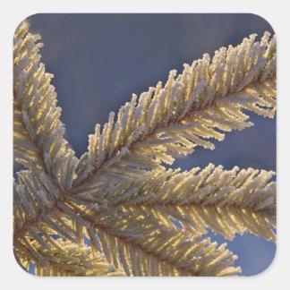 Frost en el árbol imperecedero, home run, Alaska Pegatina Cuadrada