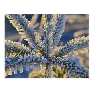 Frost en el árbol imperecedero, home run, Alaska Tarjeta Postal