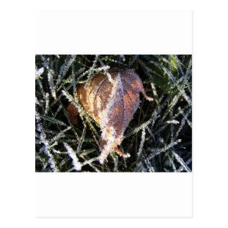 Frost en una hoja tarjeta postal