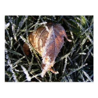 Frost en una hoja tarjetas postales