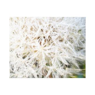frost on dandelion canvas print