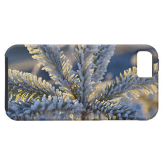 Frost on evergreen tree, Homer, Alaska iPhone 5 Case