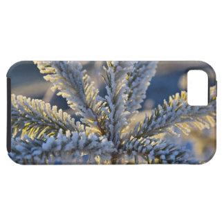 Frost on evergreen tree, Homer, Alaska iPhone SE/5/5s Case