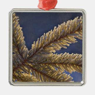 Frost on evergreen tree, Homer, Alaska Metal Ornament