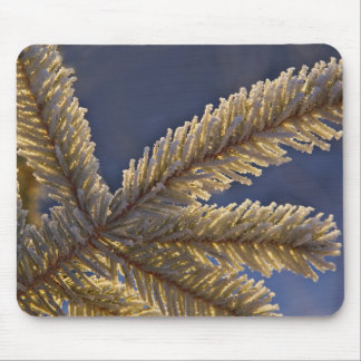 Frost on evergreen tree, Homer, Alaska Mouse Pads