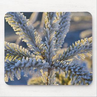 Frost on evergreen tree, Homer, Alaska Mouse Pad