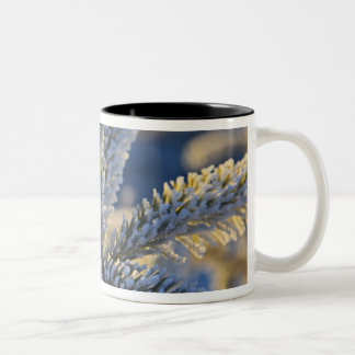 Frost on evergreen tree Homer Alaska Coffee Mug