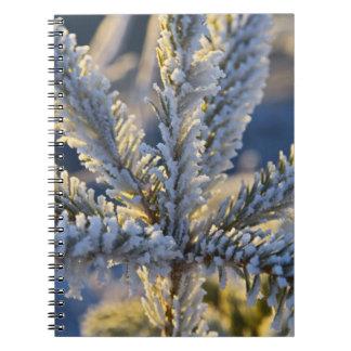 Frost on evergreen tree, Homer, Alaska Notebook