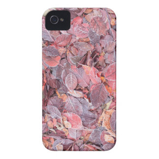 Frost on fallen leaves, Fall colors, Mill Creek iPhone 4 Case
