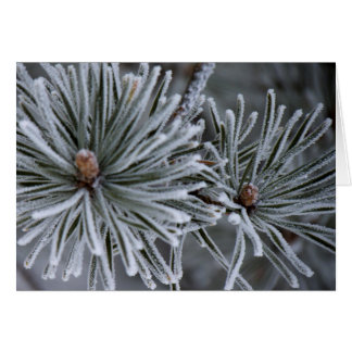Frost on Pine Needles Card