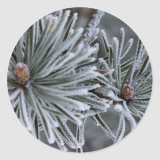 Frost on Pine Needles Classic Round Sticker