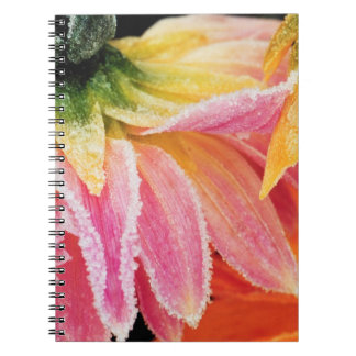 Frost on the last blooms of the fall - Dalhia - Notebook