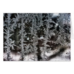 Frost on Window Greeting Cards