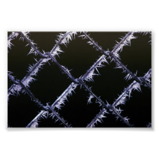 Frost patterns poster