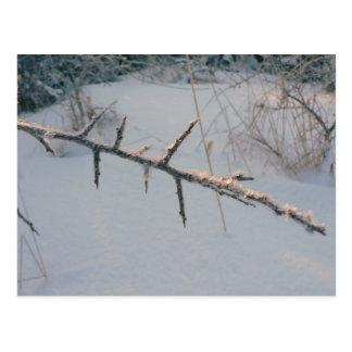 frostbitten-twig-2_magnus_rosendahl postcard