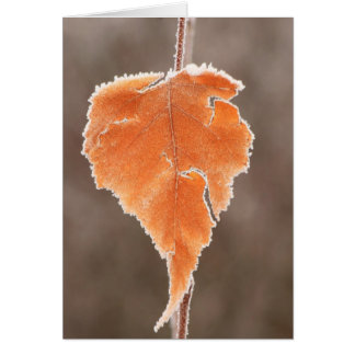 Frosted Birch Leaf at Bog Greeting Card