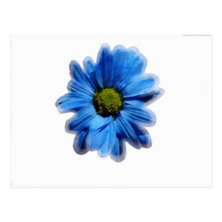 Frosted Blue Daisy Postcard