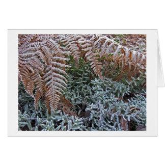Frosted Fern Garden Card