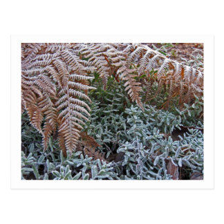Frosted Fern Garden Postcard