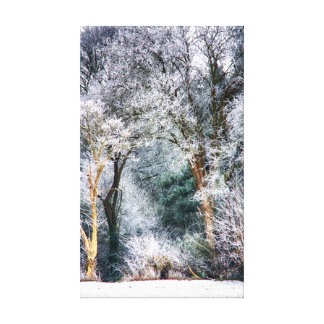 Frosted Forest HDR Canvas Print