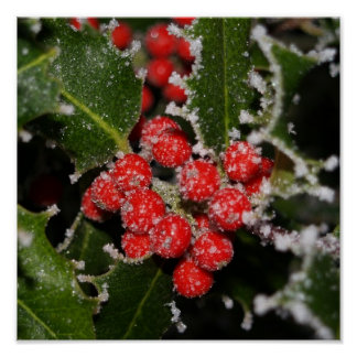 Frosted Holly Poster