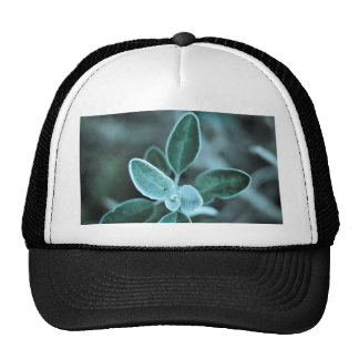 Frosted Leaf Trucker Hat
