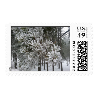 Frosted Pine Tree Foggy Day~Conifer, CO2 Postage