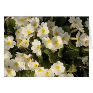 frosted primroses card