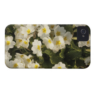 frosted primroses iPhone 4 Case-Mate case