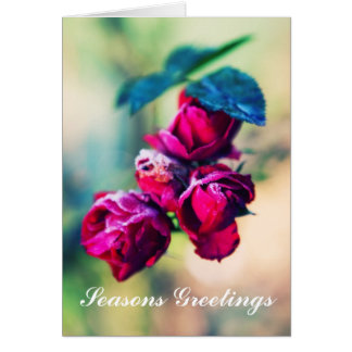 Frosted Roses Card
