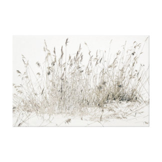 Frosted Straw Canvas Print